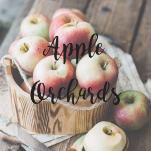 Southern MN Apple Orchards
