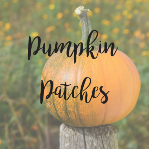 Southern MN Pumpkin Patches